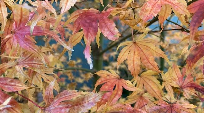 fall leaf color 1